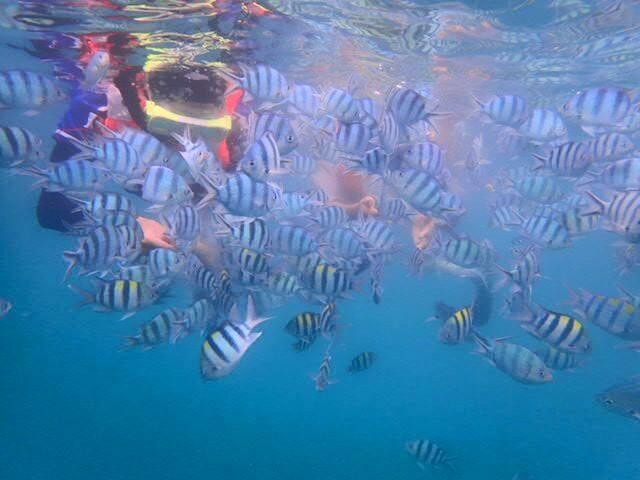 Pakej Pulau Perhentian 2019 – Bajet & Murah