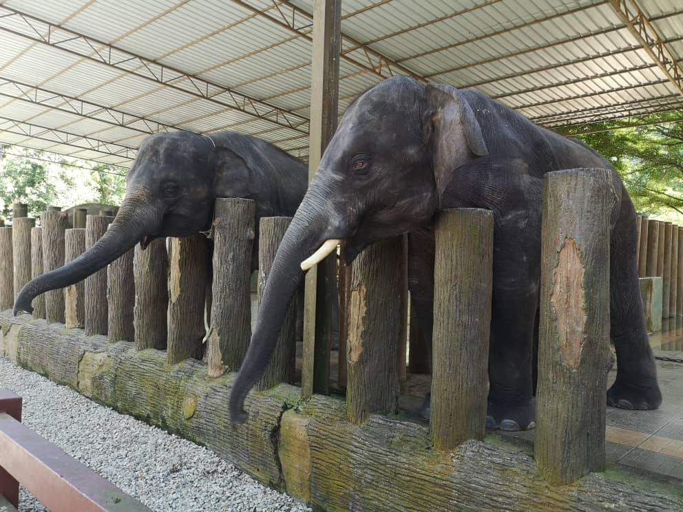 Pusat Konservasi Gajah Kuala Gandah